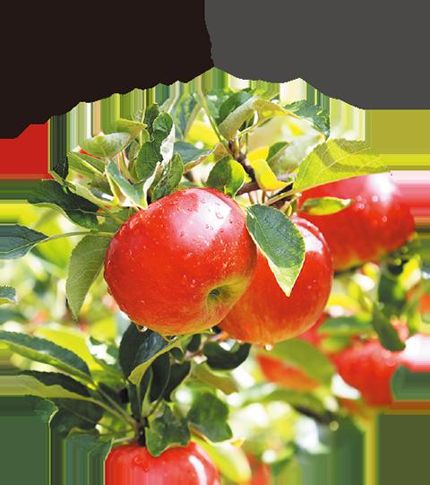 りんご発祥