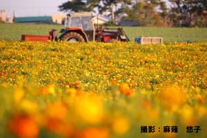 【9月web】『ねぎ畑の秋』麻薙悠子様