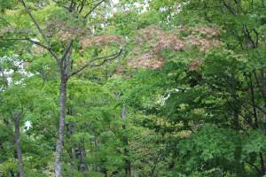 ↑森林公園②