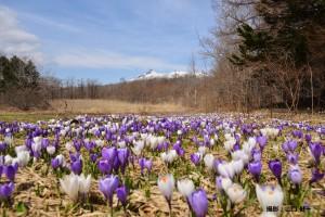 4月山口健一様「春一番」