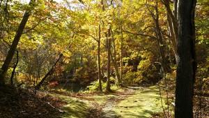 (秋)島巡りの路
