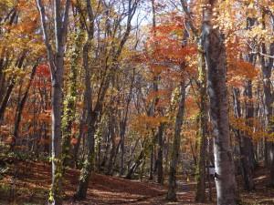 ↑大沼森林公園にて。風が吹くとはらはらと葉が舞います。(2017.10.27)