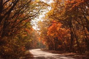 ↑大沼湖畔周遊道路。紅葉のトンネルが綺麗です!(2017.10.24)