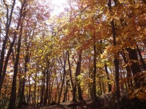 ↑大沼森林公園にて。鮮やかに色付く木々の中の散策は気持ちが良いです。(2017.10.27)