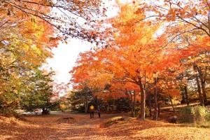 ↑黄色・橙色の絨毯を踏みしめながら。(2017.10.24)