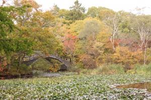 ↑小沼橋付近はさまざまな秋色に彩られています。(2017.10.13)