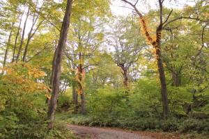 ↑小沼散策路。まだ色付きが始まっていない木もあります。(2017.10.13)
