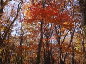 ↑まだまだ美しく色付く木々がたくさんあります。(2017.10.27)