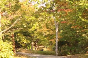 ↑散策路はまだ緑が多い印象です。(2017.10.9)
