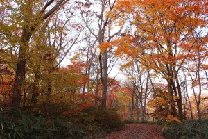 ↑小沼散策路。足元には落ち葉がたまってきました。(2017.10.28)