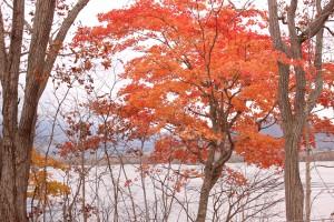 ↑色付きが遅い木は、まだきれいです!(2017.10.30)