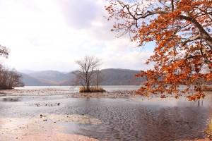 ↑小沼にて。湖面に葉が落ちて、模様のようになっています。(2017.10.31)