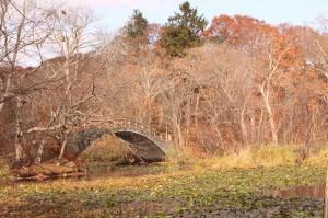 ↑小沼橋付近。落葉がすすみましたね・・・。(2017.10.31)