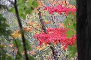 ↑緑の中に、所々赤く色付く木が!キレイです。(2017.10.10)