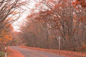 ↑大沼湖畔周遊道路。だいぶ落葉が進んでしまいました。(2017.10.30)