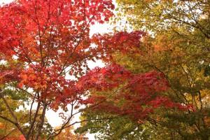 ↑森林公園内。色づきの早い木は赤くなっています!
