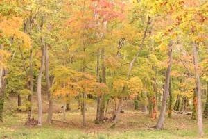 ↑大沼森林公園(2017.10.16)