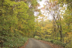 ↑日暮山登山道。日陰はまだ緑が多い。(2017.10.19)