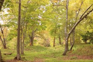 ↑森林公園(2017.10.8)