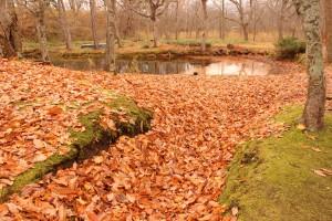 ↑散策路には落ち葉が川のように積もっています!(2017.11.4)