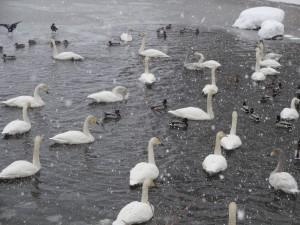 ↑セバットにも氷が張出しました。(2018年2月12日)