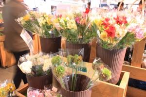 ↑七飯町は花の栽培も盛ん。アルストロメリアが並んでいます。