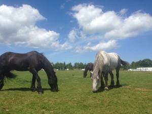 paardmusee (5)