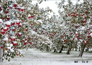 11月児玉様 リンゴがびっくり