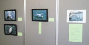 水鳥写真展1