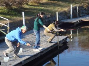 ワカサギ桟橋釣り
