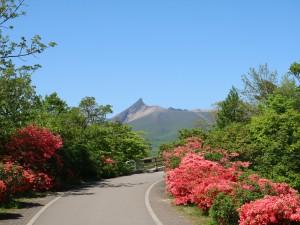5月 大島の路(ツツジ)